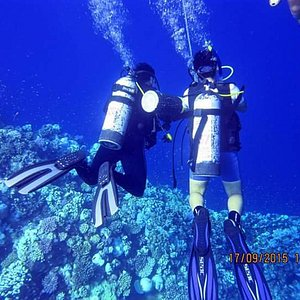 shark diving available