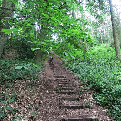 Access to these woods would have been nigh-on impossible for me without these great steps. Thank