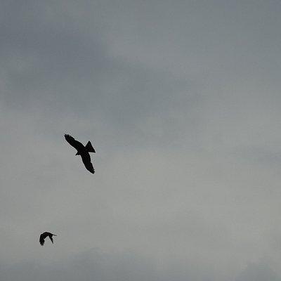 wouwen-roofvogels bij bezoekerscentrum de trekvogel;Almere