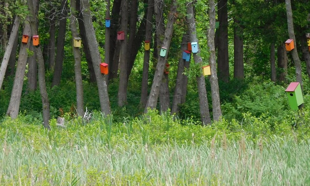 Birdhouse Forest at White's Beach
