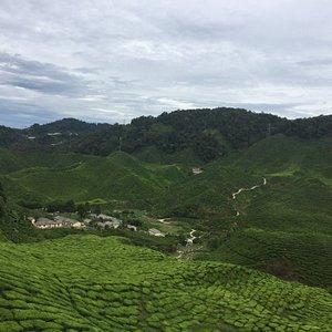 Scene showing tea leaves
