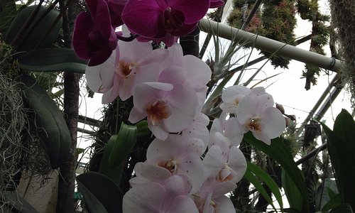 Orchids at the Botanical Gardens, Linz