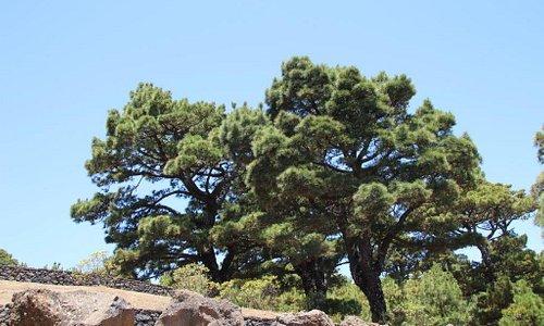 schöner alter Baum