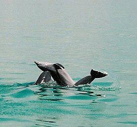 Dolphin's in the playground