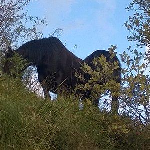 Cavalli selvaggi a Giacopiane
