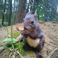 Auf dem Eichhörnliweg sind die putzigen Tierchen ganz zutraulich.