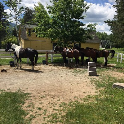 Photo of a few of the horses. Middle was mine, named Bud