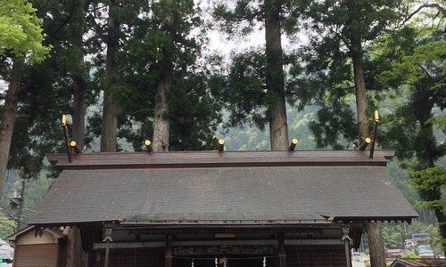 拝殿正面 後ろに高い杉の木が生える