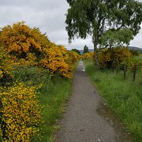 The cycle track between Ballater and Adoyne