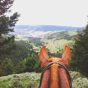Views are just better between the ears of a horse