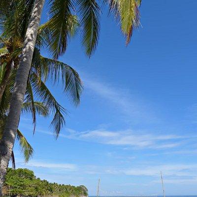 overlooking coconut trees