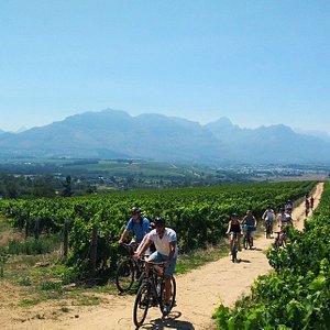 Breathtaking vineyard riding