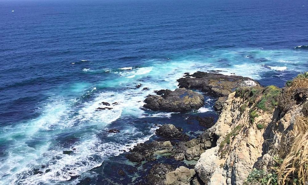 The view of the Tomales Point Bluffs!