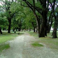 Des arbres centenaires et une énergie extraordinaire....