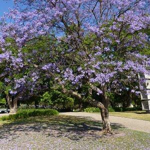 Purple blooms at Vasco da Gama Garden (5)