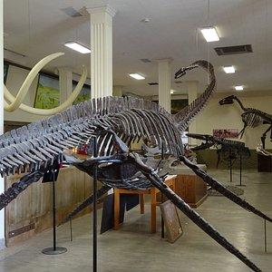 The plesiosaur!