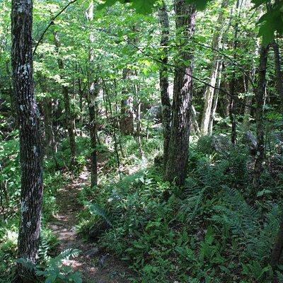 Beautiful trail to hike.