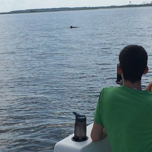 Rent a pontoon boat and look for dolphin