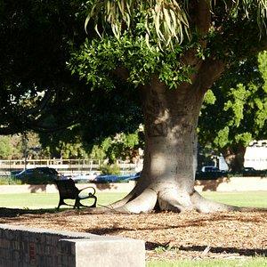 大きな木の陰でベンチに座ってまったり過ごすのも至福の時です
