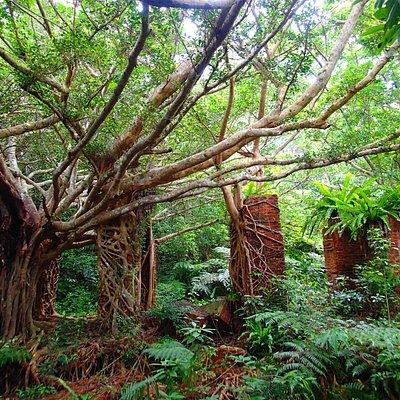 ジャングル化しています