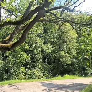 Questo è uno dei tanti sentieri del parco. Attenti a non perdervi!!!