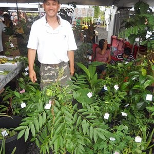 one of the nice plant vendors that grows his own plants for sale