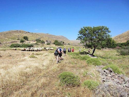 walking through the Lesvos landscape