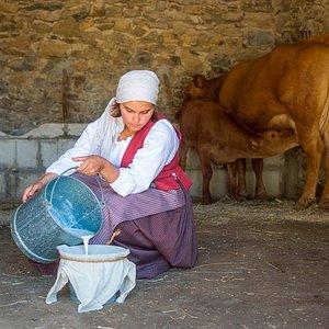 Espectáculo de las tareas antiguas del campo en vivo: ordeñar, hacer queso, labrar, sembrar...