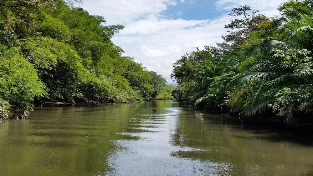 This river and jungle are like out of a dream!