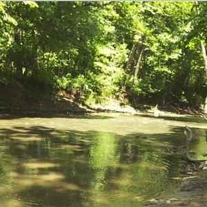 Creek at park