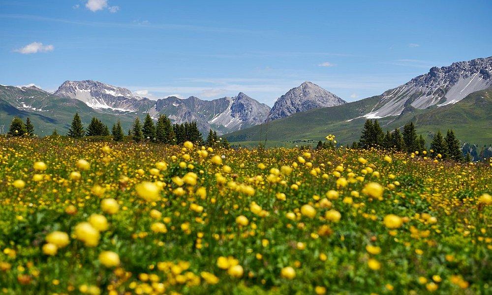 Frühlingsblumen auf der Prätschalp