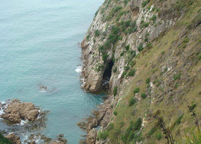 Cliffs at Kaka Point.