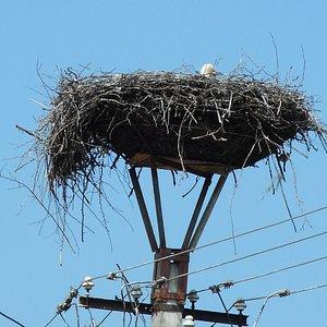 nido cigueña