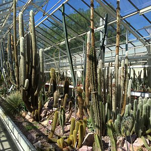 Part of the large cacti collection