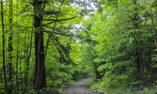 Typical of the road in - lots of beautiful green trees.