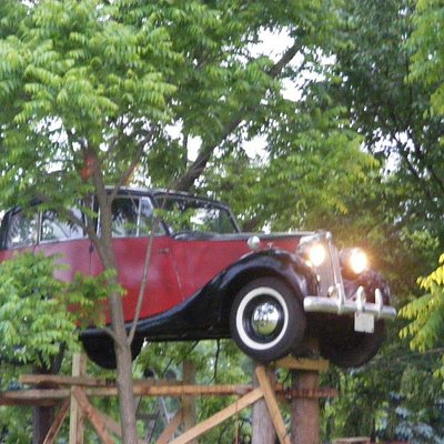 A 1946 Triumph 1800 Saloon is in the trees!