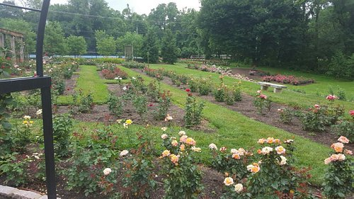 A view of the rose garden facing Wilson Blvd