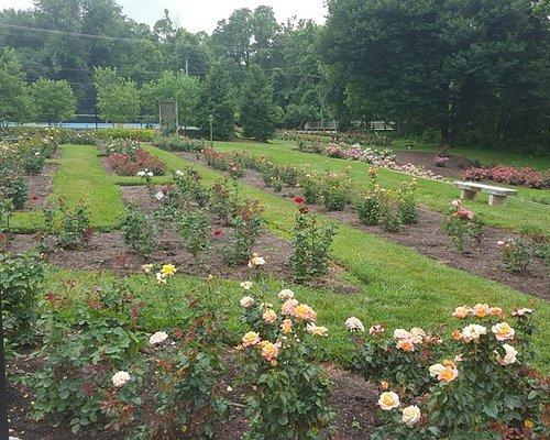 A view of the rose garden facing Wilson Blvd