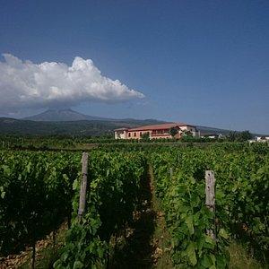 #Etna, #Linguaglossa contrada #Martinella by #Vivera #Etna #Winery