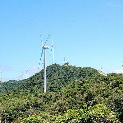 周辺の風車群