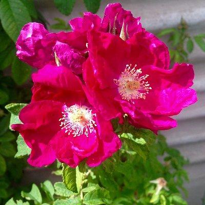 Brightt Pink, Wildflowers