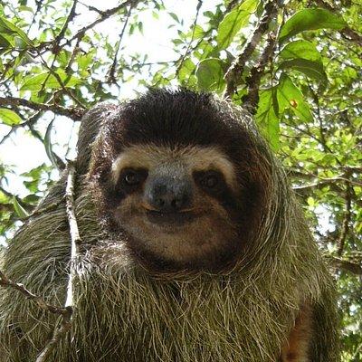Sloth along trail in Santa Fe National Park