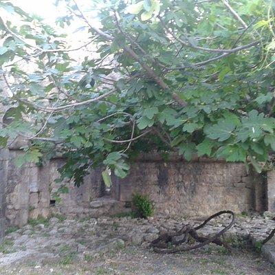 развалины бенедиктинского монастыря Богородицы Ратачкой