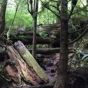 THIS is what the trail looked like...be ready to get dirty.