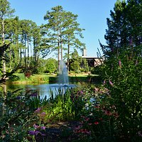 Beautiful view of the Cypress Pond