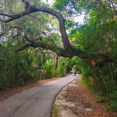 heading through the woods