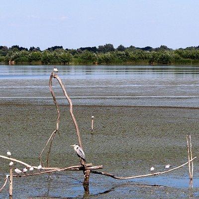 Wasservogel-Paradies