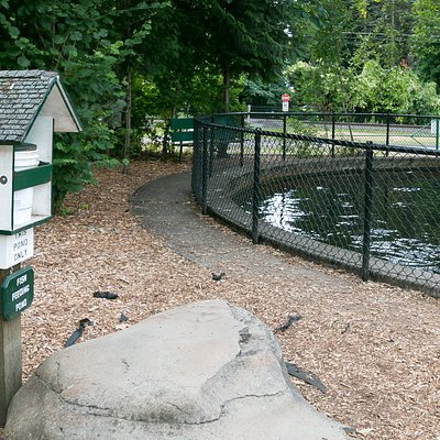 Trout feeding pond (it's loaded with trout)!