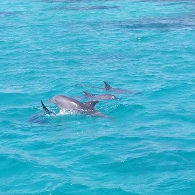 Neugierige Meeresbewohner