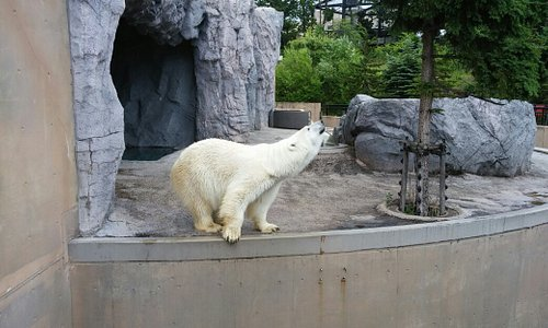 1年振りに旭山動物園に行ってみました。あまり暑くなかったお陰で、動物たちは元気でした。特にオオカミは今まで見た中で一番元気でした。